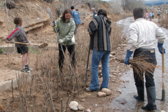 frenchies-treeplanting-2010SMALLPNG